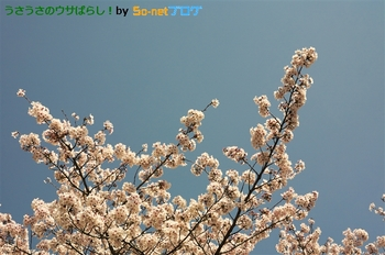 resize_CRW_1304.jpg